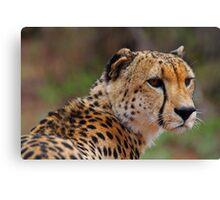 Handsome feline Canvas Print