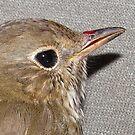 Songbird (see description) by Ginny York