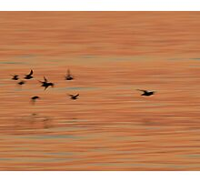 Shorebird Abstraction Photographic Print