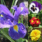 Iris Collage by BlueMoonRose