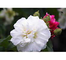 White Splendor  Photographic Print