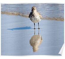 Three Birds in One - Dunlin - Hampton Beach, NH 10-12-12 Poster