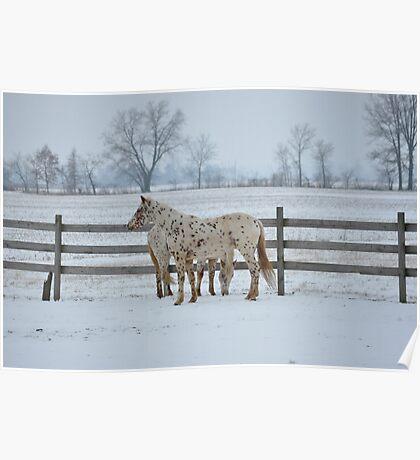 Appaloosas in Snow Poster