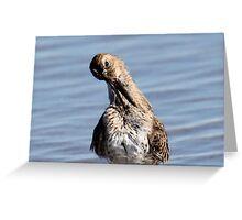 A Dunlin Strikes a Pose - Hampton Beach, NH 10-12-12 Greeting Card