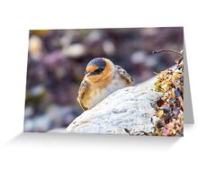 Cave Swallow - A Rare Visitor to Our State - Odiorne Point - Rye, NH 11-25-12 Greeting Card
