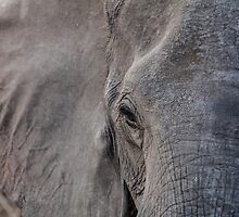 The Eye of the Elephant by travisdallen