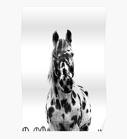 Appaloosa in Black and White Poster