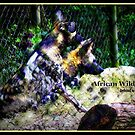 African Wild Dogs Abstract by Paula Tohline  Calhoun