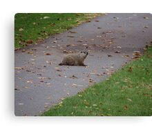 Silly Ol Groundhog Canvas Print