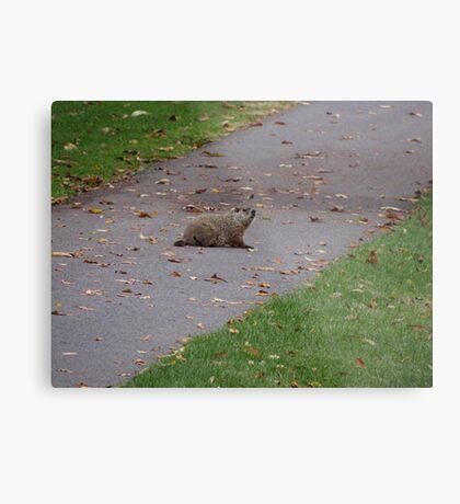 Silly Ol Groundhog Metal Print