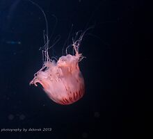 Jellyfish by Debsonthesofa