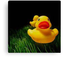 Grass fed duck Canvas Print