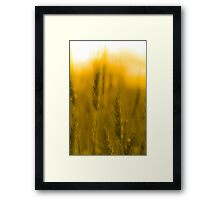 Prairie Gold Framed Print