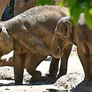 Elephants  by Tom Newman