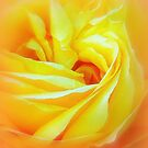 Yellow Swirl by Paula Tohline  Calhoun