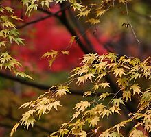 Fall in yellow and red by DerekEntwistle