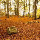 Stone in the forest by DavidCucalon