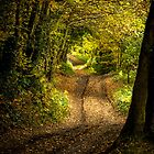 Ladies Walk - Baglan Woodland by digihill