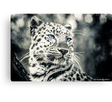 Love Panther III Canvas Print