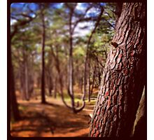 Blurred Forest Photographic Print