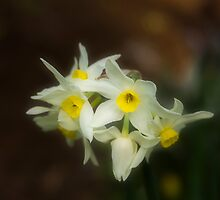Softly Daffodils by Elaine Teague