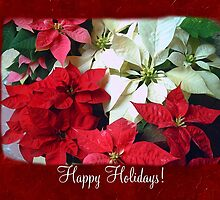 Mixed color Poinsettias 1 Happy Holidays P5F1 by Christopher Johnson