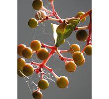 autumn III - otoño Photographic Print