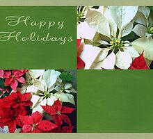 Mixed color Poinsettias 1 Happy Holidays Q5F1 by Christopher Johnson