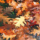 Autumn leaves wed by RosiLorz