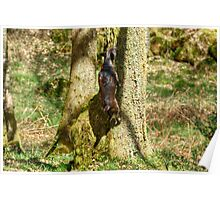 Arboreal Terrier Poster