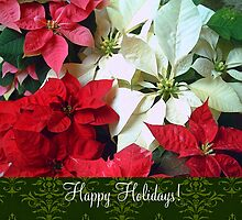 Mixed color Poinsettias 1 Happy Holidays S6F1 by Christopher Johnson