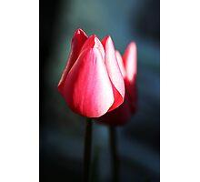 Reflective Rose Photographic Print