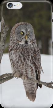 Great Grey Owl iphone/Samsung Galaxy case by hummingbirds