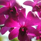 Clump of Pink Orchids by Shaun  Gabrielli
