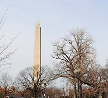 Washington Monument Behind Trees by Suleyman Anadol