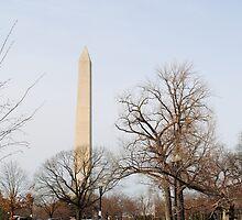 Washington Monument Behind Trees by Suleyman Anadol