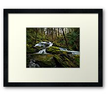It's A Green World ~ Creek ~ Framed Print