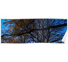 long branched tree Poster