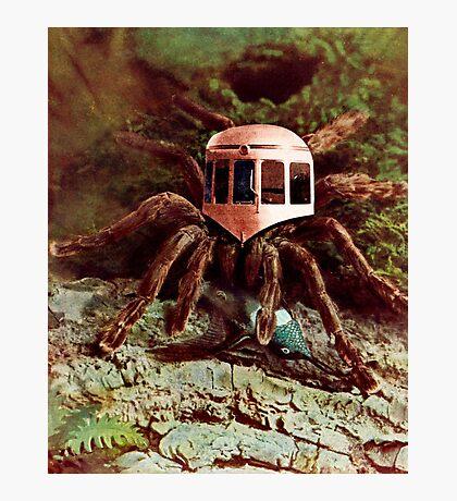 Bird Eating Spider. Photographic Print