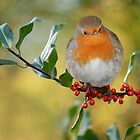 The Robin by Lyn Evans