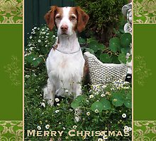 Christmas Card 30 by Australian Brittanys