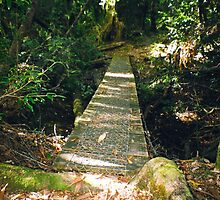 Forest boardwalk, Tarkine, Tasmania by Alister A Mackinnon