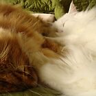 Nappy time by Marie-Eve Boisclair