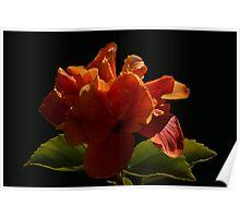 Hibiscus 8307 Poster