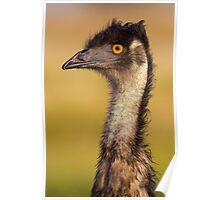 Emu, Australia Poster