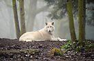 Lone Wolf by Dana Horne