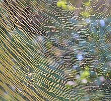 Golden Web by Dawne Dunton