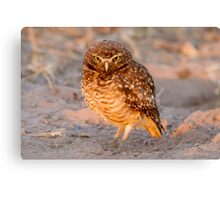 Burrowing Owl, Brazil Canvas Print