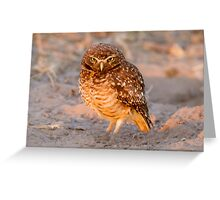 Burrowing Owl, Brazil Greeting Card