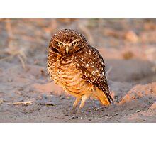 Burrowing Owl, Brazil Photographic Print